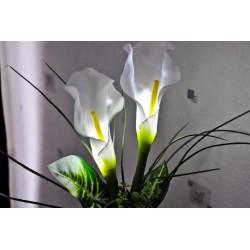 Fleurs Calla